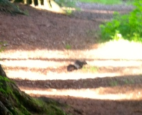 The Jet Black Squirrel…not my imagination