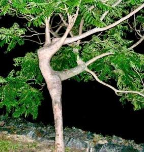treesgreatwall
